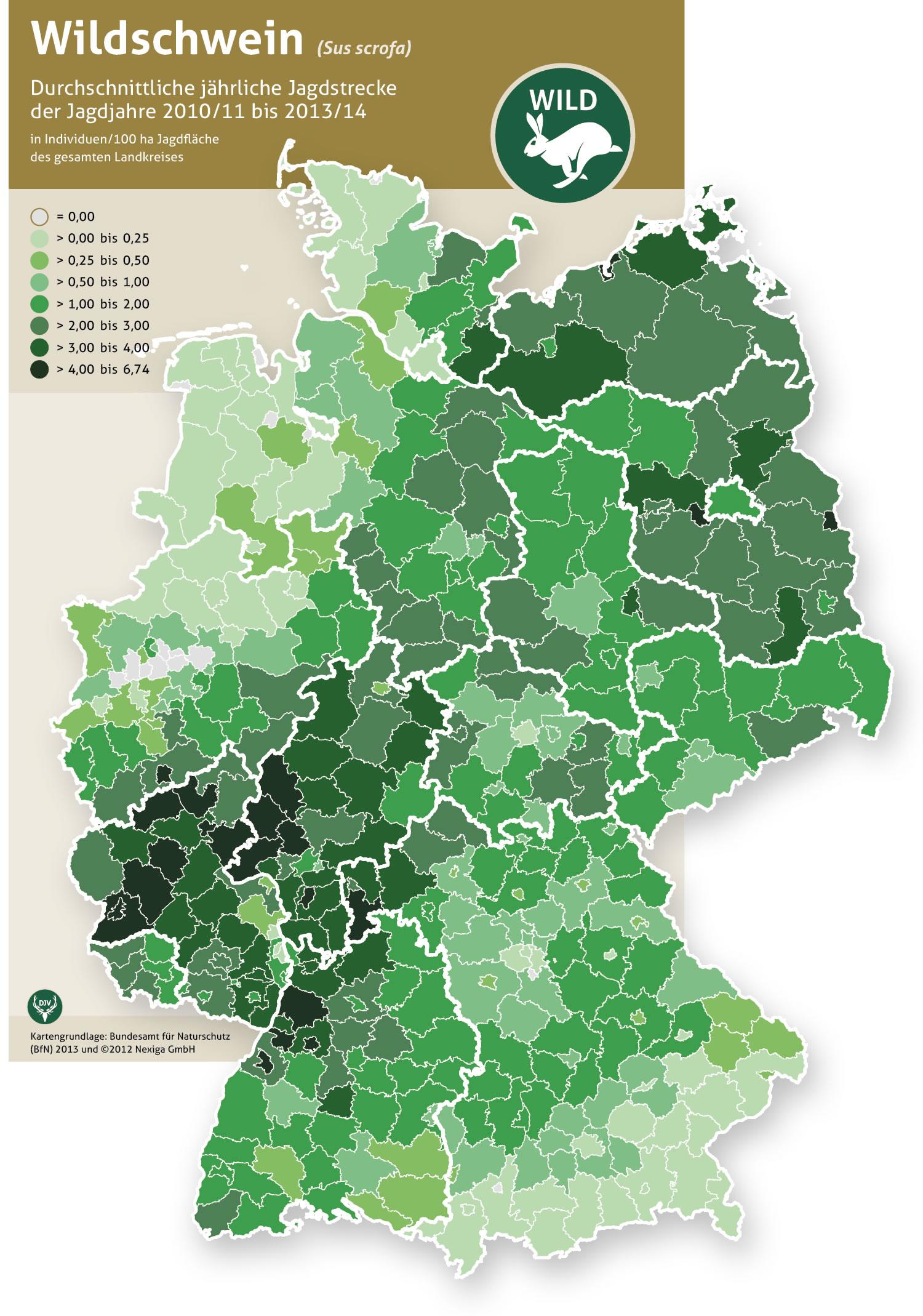 Waschbär In Deutschland