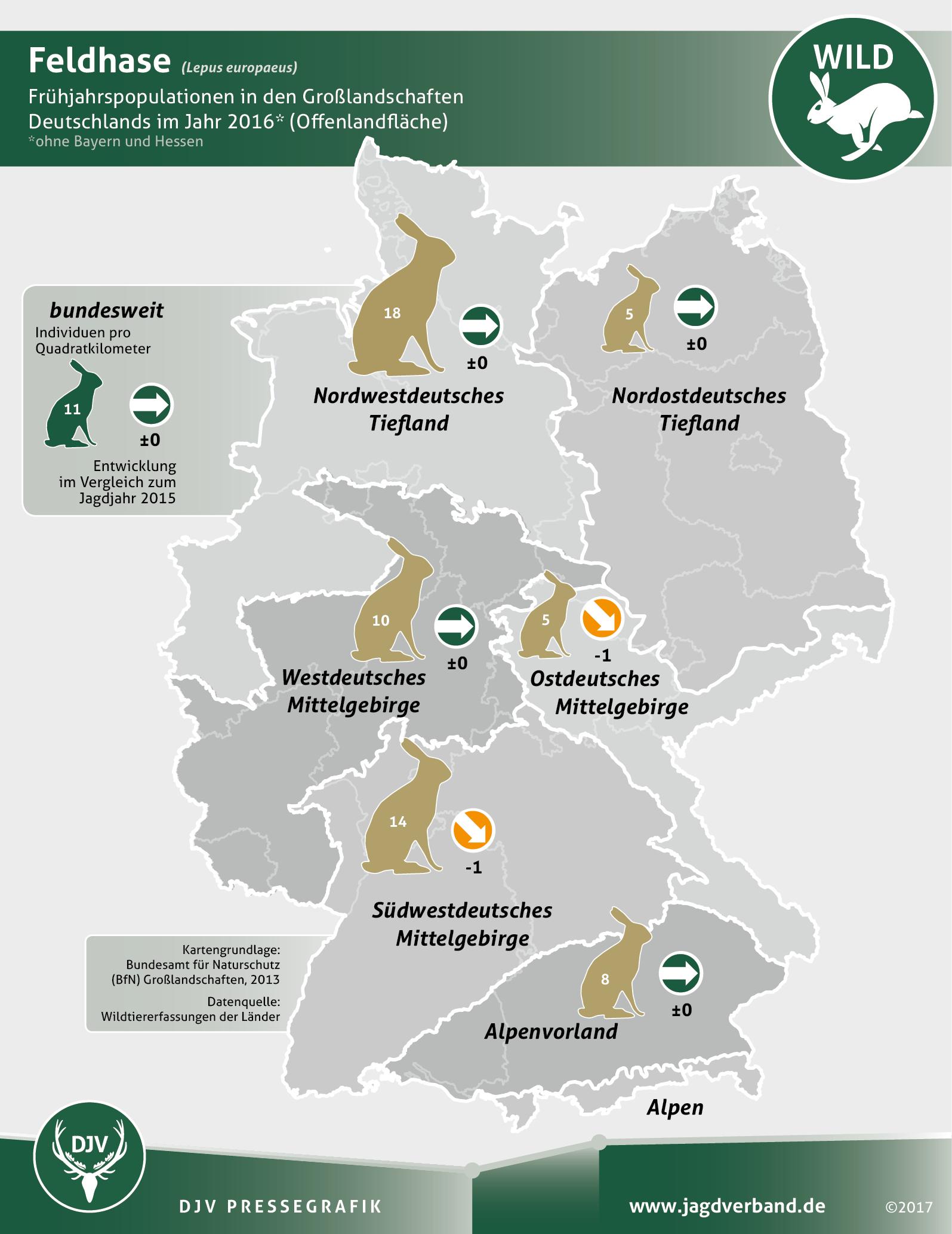 Feldhasen in Deutschland 2016
