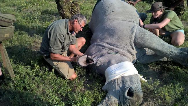 """Durch Einsetzen des Jagdverbots stieg die Wilderei zwischen 2014 und 2018 stark an. """"Das Jagdverbot ist gescheitert, es hat mehr geschadet als genutzt. Das Jagdverbot hat es nicht geschafft, Menschen, Elefanten und andere Wildtiere zu schützen"""", so Dr.Verreyenne."""