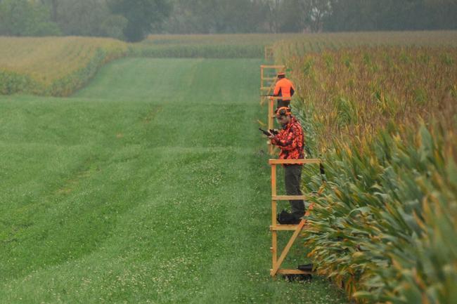 Um eine Bejagung zu ermöglichen, sollten Landwirte Bejagungsschneisen einhächseln.