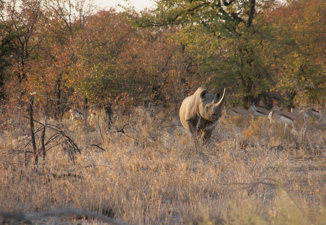 """""""Schutz von Nashörnern bedeutet für den, auf dessen Grund sie sich aufhalten, zuerst einmal eine akute Gefahr"""", sagt Danene van der Westhuyzen (NAPHA)."""