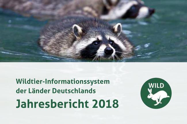 Der DJV hat heute den WILD-Jahresbericht 2018 veröffentlicht.