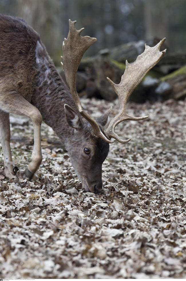(Quelle: Tierfotoagentur.de, Schäfer)