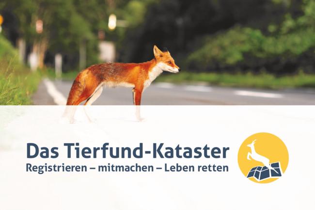 Schwerpunktmäßig geht es beim Tierfund-Kataster darum, Wildunfälle zu vermeiden und Straßen wildtierfreundlicher zu gestalten.
