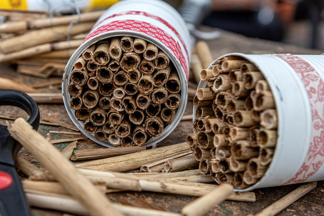 """""""Bienen, ganz besonders Wildbienen, haben eine elementare Bedeutung für unsere Wild- und Kulturpflanzen"""", sagt Imkerin Hilke Wulf-Ahlers."""