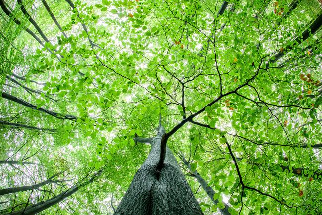 Der DJV begrüßt die Förderung des Waldumbaus nach ökologischen Gesichtspunkten.