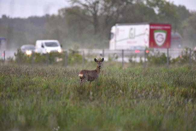 Das Tierfund-Kataster hilft, Wildunschwerpunkte zu ermitteln und diese zu entschärfen.