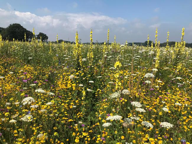 Der Anbau von Wildpflanzen steigert die Artenvielfalt und ist ökologisch wertvoll.