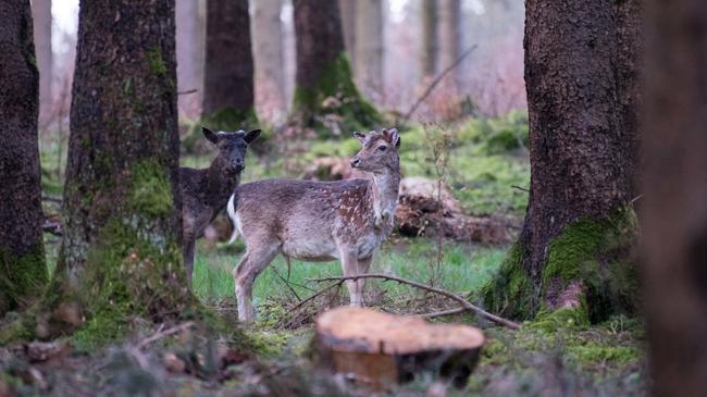 Dem Lebensraum Wald und deren Bewohner ist Sorge zu tragen.