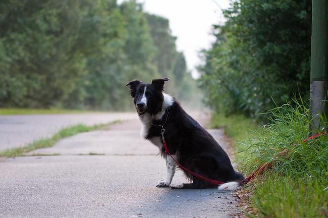 Viele Haustiere werden in der Ferienzeit zur Last und kurzerhand ausgesetzt. (Quelle: Kaufmann/DJV)
