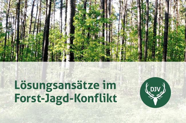 Neun Praxisbeispiele aus ganz Deutschland zeigen, wie Wald und Wild regional in Einklang gebracht werden.