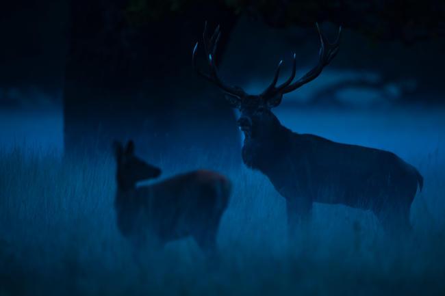 Im Dunkeln sind Wildtiere nur schwer zu erkennen, daher sollte die Geschwindkigkeit bei unübersichtlichen Stellen reduziert werden.