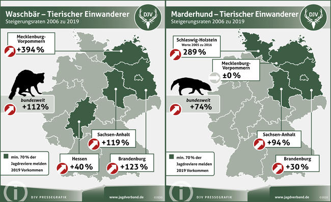 Waschbär und Marderhund: Steigerungsraten 2006 zu 2019