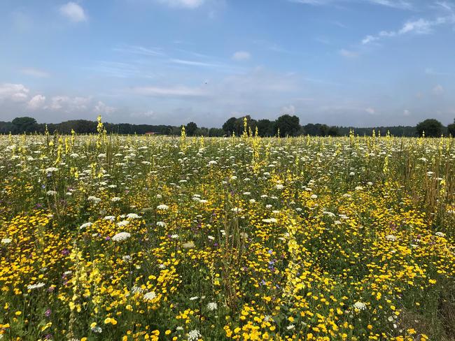Mehrjährige Wildpflanzenkulturen zur Biomasseproduktion bieten ganzjährig Nahrung sowie Deckung für Säugetiere oder Feldvögel.