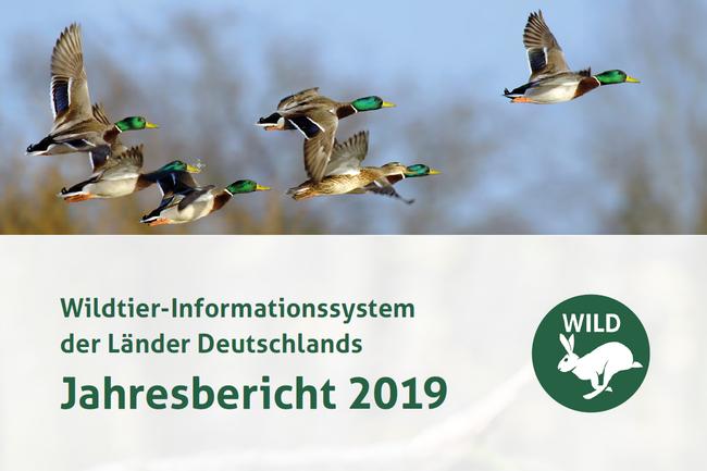 Der DJV hat heute Monitoring-Daten zu 16 ausgewählten Tierarten für das Jahr 2019 im neuen WILD-Bericht veröffentlicht.