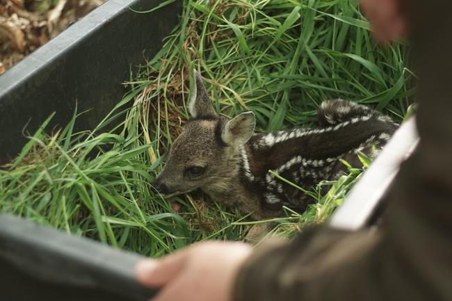 Wildtierrettung bundesweit: Neun Jagd- und zwei Bauerverbände sind Teil der DWR.