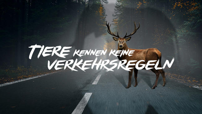 """Der DJV startet gemeinsam mit dem ACV die Kampagne """"Tiere kennen keine Verkehrsregeln"""""""