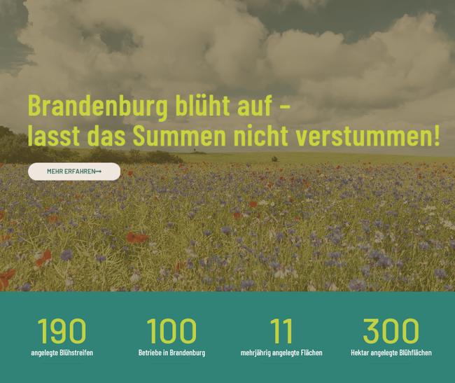 Brandenburg blüht auf- lasst das Summen nicht verstummen