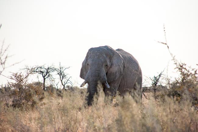 """Präsident Masisi: """"Holen Sie sie ab. Und wenn sie gelernt haben, wozu diese Tiere fähig sind, können wir vielleicht reden."""""""