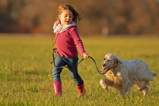 Jagdhunde sind Gefährten und vollwertige Familienmitglieder zugleich.