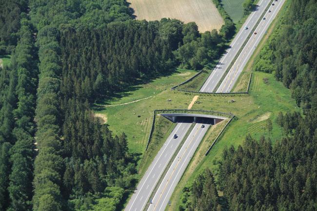 Grünbrücken vernetzen Lebensräume