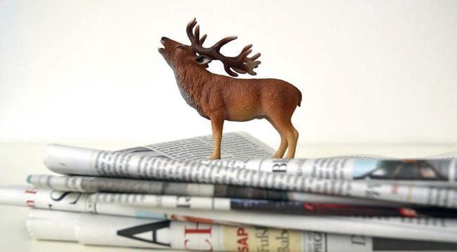 Hirsch auf  Zeitungen