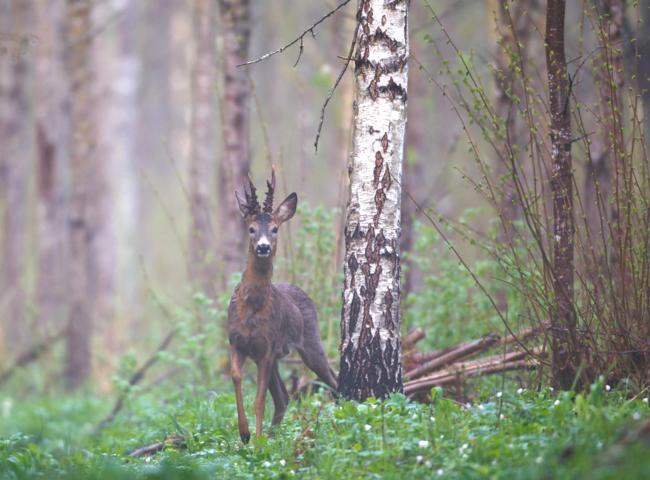 Entscheidend für den aktiven Waldumbau und Wiederaufforstung sind laut DJV langjährige und intensive Pflege- sowie Schutzmaßnahmen.