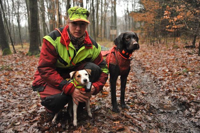 Jägerin und Jagdhunde sind durch Signalwesten gut erkennbar.