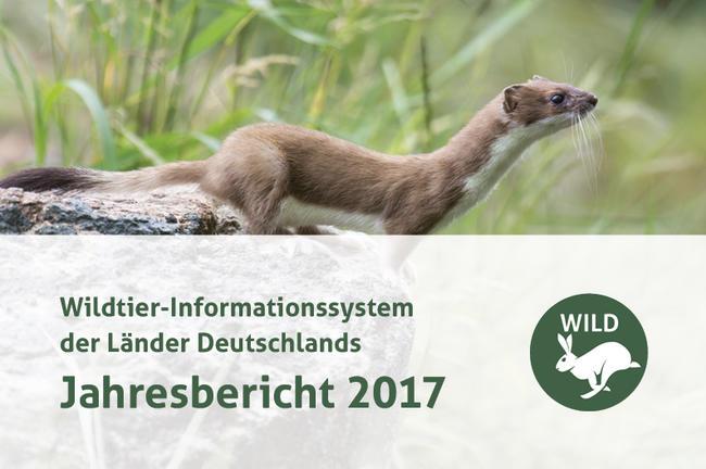 Der 76 Seiten starke Bericht umfasst umfangreiche Daten zur bundesweiten Verbreitung und Populationsentwicklung der Wildarten.