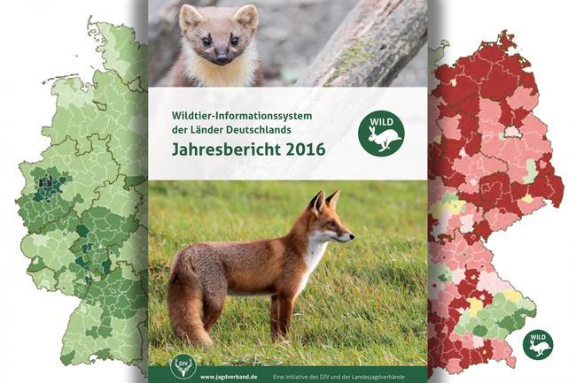 Der umfassende WILD-Jahresbericht 2016 stellt unter anderem neue Daten zur Jagdentwicklung heimischer Raubwildarten, wie Dachs, Iltis und Marder vor.