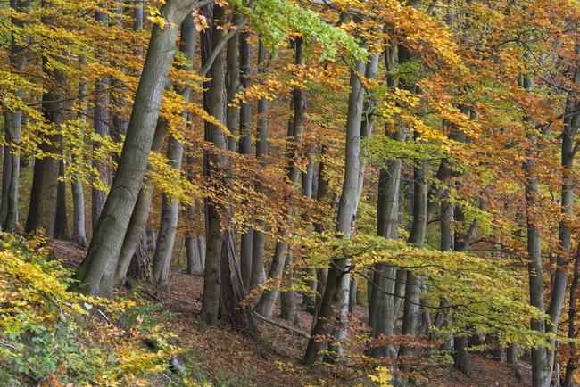 Keine Einigung beim Thema Wald und Wild zwischen DJV und DFWR