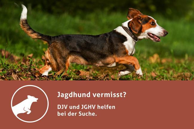 """DJV und JGHV bieten mit der Facebook-Seite """"Jagdhund vermisst"""" direkte und kompetente Hilfe."""