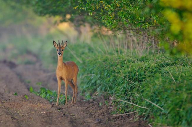 Ein klimastabiler und artenreicher Waldumbau kann nur mit Förstern und Jägern umgesetzt werden.