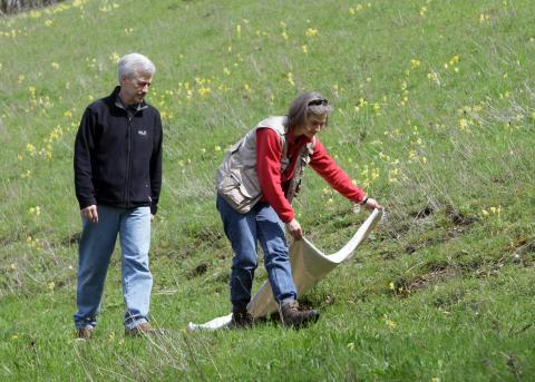 Mit einem hellen Leinentuch fangen die Wissenschaftler Zecken (Quelle: Baden-Württemberg Stiftung/DJV)