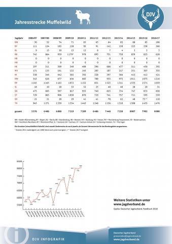 Muffelwild: Jagdstatistik 2006-2017
