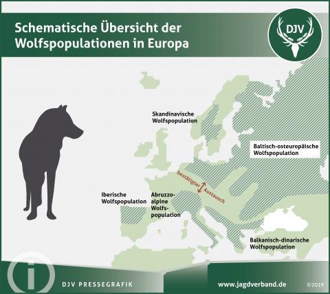 Schematische Übersicht der Wolfspopulation in Europa