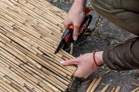 2. Schilfstängel zuschneiden, sodass sie in die Dose oder den Eimer passen und den Rand nicht überragen. (Quelle: Kaufmann/DJV)