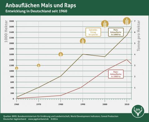 Anbauflächen Mais und Raps in Deutschland seit 1960