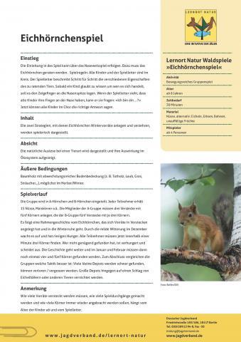 Waldspiel Eichhörnchen