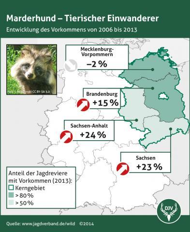 Marderhund: Verbreitung 2006-2013