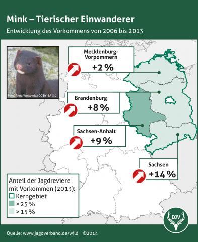 Mink - Entwicklung des Vorkommens 2006 bis 2013 (Quelle: DJV)