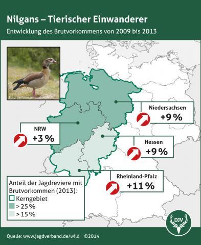 Nilgans - Entwicklung des Brutvorkommens 2009-2013