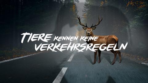 """Banner Kampange """"Tiere kennen keine Verkehrsregeln"""""""