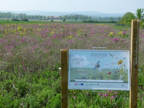 Blühfläche Projekt Partridge