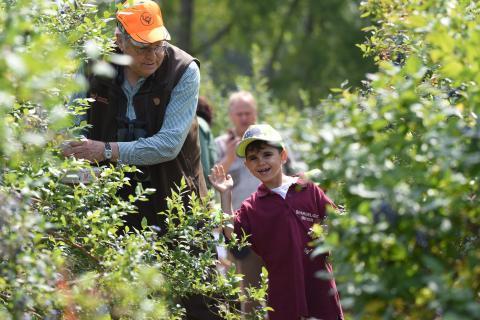 Im Heidelbeer-Feld wird genascht und gesammelt.  (Quelle: Sebastian Kapuhs)