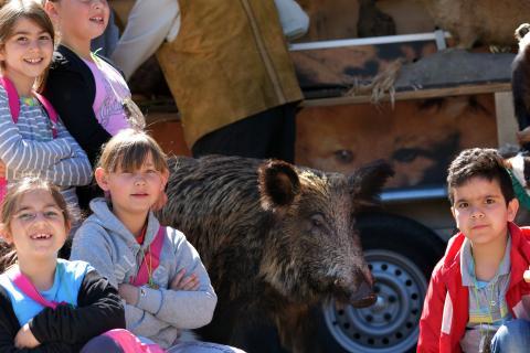 Das Wildschwein war eine Hauptattraktion am Lernort-Natur-Stand.