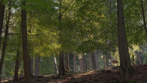 Dammwild Wald DVD Auf der Jagd