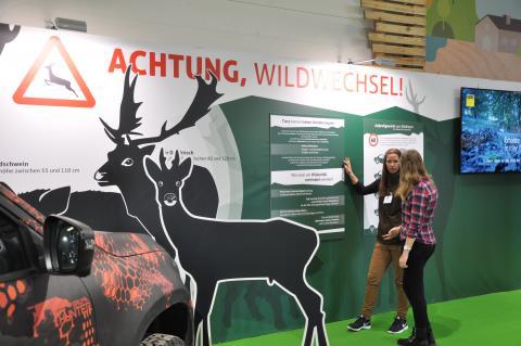 IGW19 Achtung Wildwechsel Erklärung Wildunfall