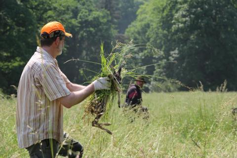 Ein Jäger rettet ein Kitz aus einer Wiese (Quelle: DJV)