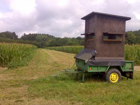 Jagdschneisen (hier im Mais) erleichtern die Jagd in allen Feldkulturen wie etwa Raps und Weizen.